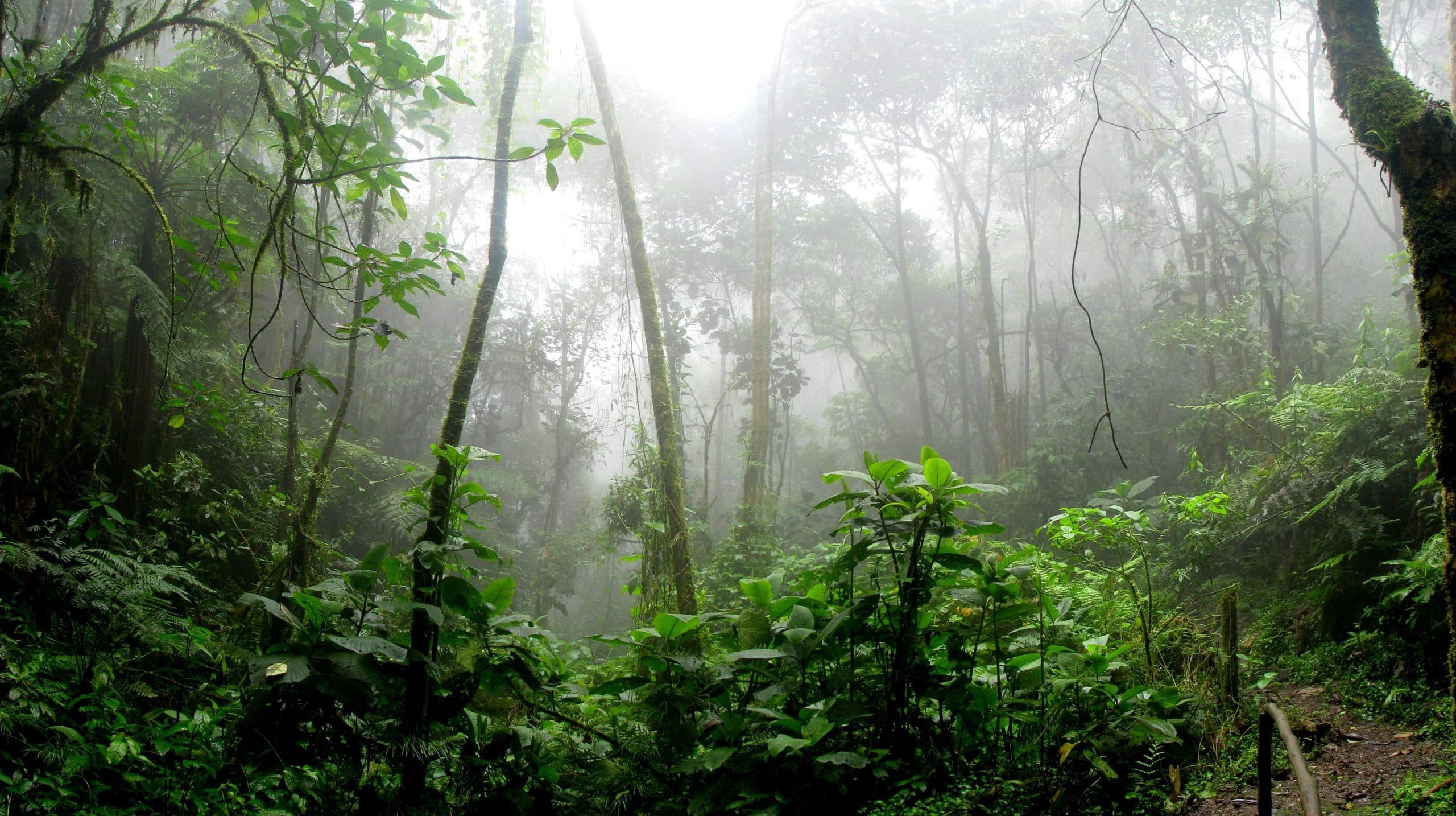 Medicinal Plants of the Amazon